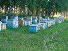 Скачать бесплатно foto Другие животные Продам пчел на высадку 32592995 в Искитиме