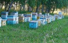 Продам пчел на высадку