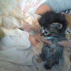 отдам даром котят в добрые руки или котёнка