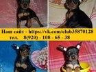 Изображение в Собаки и щенки Продажа собак, щенков По минимальным ценам продам чистокровных в Иваново 9000