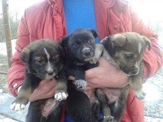Скачать изображение Продажа собак, щенков Отдам в добрые руки щенков 32532535 в Иваново
