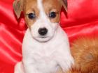 Смотреть фотографию Стрижка собак Груминг салон Стильный питомец 35436007 в Ивантеевке
