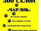 Свежее фотографию  Все виды стрижек, креативный груминг, ЗОО Салон «Чарлик» 34246454 в Ижевске