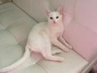 Фото в Кошки и котята Продажа кошек и котят Котенок Нюша, возраст примерно 4 месяца. в Ижевске 0