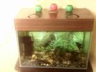 Фотография в   Продам аквариум б/у 80 литров. В комплекте в Ижевске 0