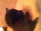 Свежее foto Отдам даром - приму в дар Отдам в добрые руки милых котят 63076447 в Ижевске