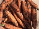 Увидеть foto  Картофель, Морковь, Свекла, Лук, Капуста, Яблоки оптом напрямую от производителя 67915656 в Якутске