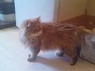 Фотография в   4 милых, маленьких котенка, приученные к в Ялта 0