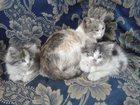 Уникальное фотографию Отдам даром Помогите котятам найти дом! 33468706 в Ярославле