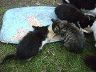 Скачать бесплатно foto  Котята срочно ищут дом 33785611 в Ярославле