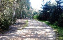 Продаю земельный участок в сосновом лесу в напр, с, Д-Городище