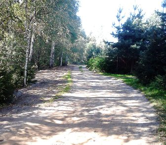 Изображение в Недвижимость Земельные участки Продаю земельный участок в сосновом лесу в Ярославле 230000