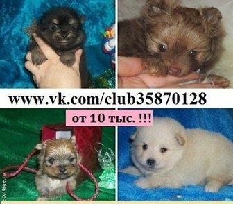 Изображение в Собаки и щенки Продажа собак, щенков Недорого продам чистокровных и не чистокровных в Костроме 10000