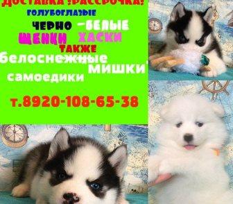 Фото в Собаки и щенки Продажа собак, щенков Самоедской лайки, белоснежных очаровательных в Ярославле 0