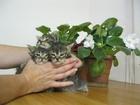 Фотки Домашняя кошка смотреть в Электростали