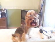 Стрижка собак Эленктросталь -Черноголовка-Ногинск Стрижка собак модельная и гиги