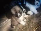 Фотки и картинки Кавказская овчарка смотреть в Йошкар-Оле
