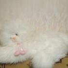 Большая мягкая игрушка белая кошечка