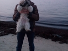 Скачать бесплатно foto Вязка собак ВЯЗКА СОБАК 38756244 в Калининграде