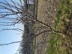 Скачать foto Земельные участки Продаю земельный участок в СНТ Дружный 1 38844937 в Калининграде
