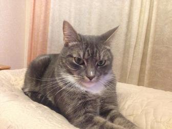 Свежее фотографию Отдам даром - приму в дар Отдам ласкового котика в самые добрые руки! 46892247 в Калининграде