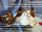 Свежее изображение Продажа кошек и котят Кошка Алиса (см, видео) 32614532 в Калуге