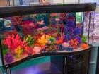Скачать бесплатно изображение  Запуск, продажа и обслуживание аквариумов 38560315 в Калуге