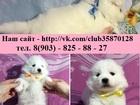 Фото в Собаки и щенки Продажа собак, щенков очаровательные щеночки самоедской лайки продам в Калуге 0