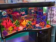 Запуск, продажа и обслуживание аквариумов Мы готовы предложить Вам:  - запуск, у