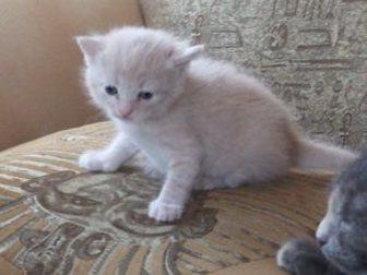 Новое фотографию Отдам даром Котёнок в дар 32909758 в Калуге