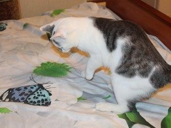 Просмотреть фото Отдам даром - приму в дар Симпатичный юный котик Болтик, в добрые руки 66515076 в Калуге