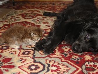 Увидеть фото Отдам даром - приму в дар Котята(1 мес): кошка и кот, Приучены к лотку и еде, 66942475 в Калуге