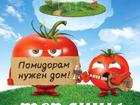 Новое фото Строительные материалы Теплицы для томатов Калязин 38547650 в Калязине