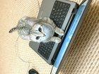 Foto в Кошки и котята Вязка Умная, красивая британка ищет спутника) в Казани 0
