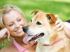 Скачать бесплатно foto  Натаска и дрессировка охотничьих собак 39124626 в Набережных Челнах