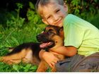 Просмотреть изображение  Дрессировка собак в Нижнекамске 39124772 в Нижнекамске