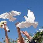 Белые голуби на выпуск в Казани для любых мероприятий