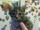Скачать бесплатно foto  Отдам котенка (девочка) 32529838 в Кемерово