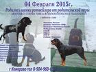 Смотреть foto Продажа собак, щенков Продаются щенки ротвейлера! 32626821 в Кемерово