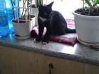 Фото в   отдам в добрые руки котика 5-6 месяцев черно-белого в Кемерово 0