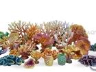 Свежее фото Аквариумы Оформление вашего аквариума - кораллы 41589360 в Кемерово