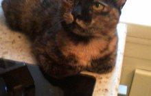 Кошка Туся ищет дом