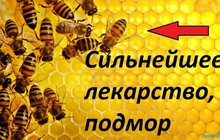 Пчелинный подмор, Настоянный