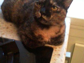 Скачать бесплатно изображение Отдам даром Кошка Туся ищет дом 33853561 в Кемерово