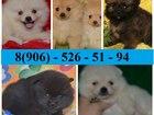 Фото в Собаки и щенки Продажа собак, щенков Очаровательных малышей померанского шпица в Кинешме 9000