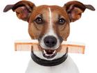 Фото в Собаки и щенки Стрижка собак Зоосалон Lita ждет всех желающих привести в Кирове 0