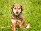 Фото в Собаки и щенки Продажа собак, щенков Коломна и Московская обл. Особенная собака в Коломне 0