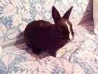 Смотреть фото Грызуны Продам кроликов 36630480 в Костроме