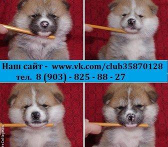 Фотография в Собаки и щенки Продажа собак, щенков В продаже очень милые и симпатичные щеночки-малыши в Костроме 0