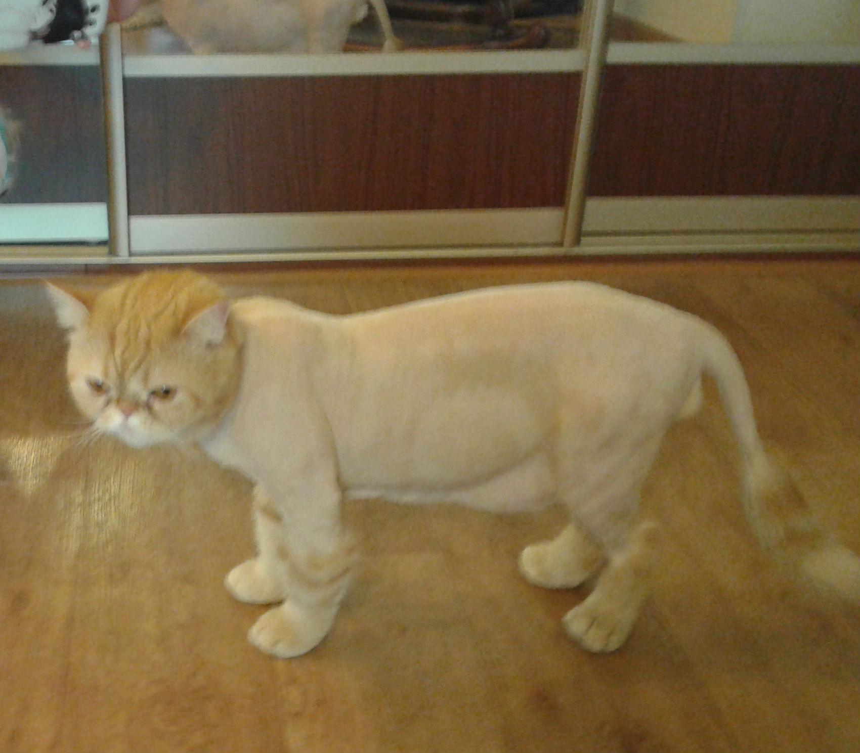 Самара. стрижка котов